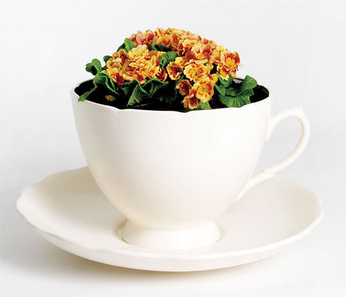 Plant_cup