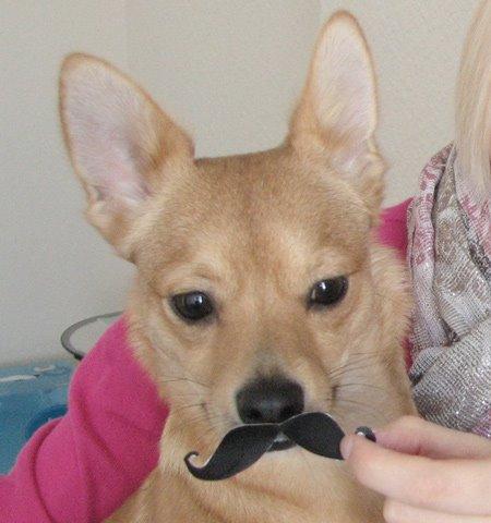 Moustache 1