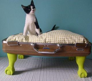 Cat suitcase