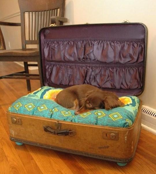 Dog suitcase
